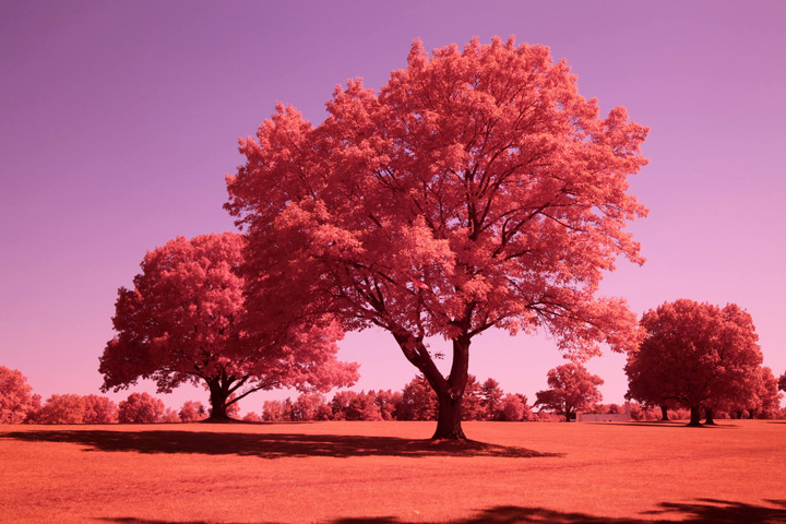 photo after infrared conversion with Full Spectrum and Two Spectrum