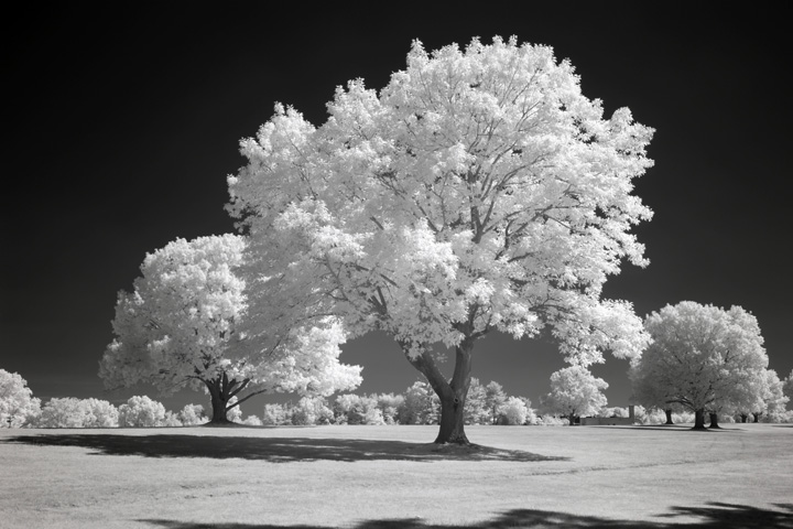 photo after infrared conversion with 850nm Infrared