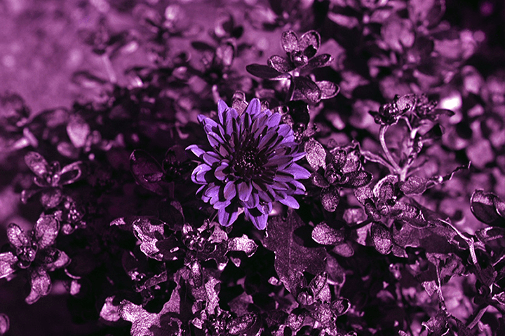 photo after infrared conversion with Ultra Violet (UV)