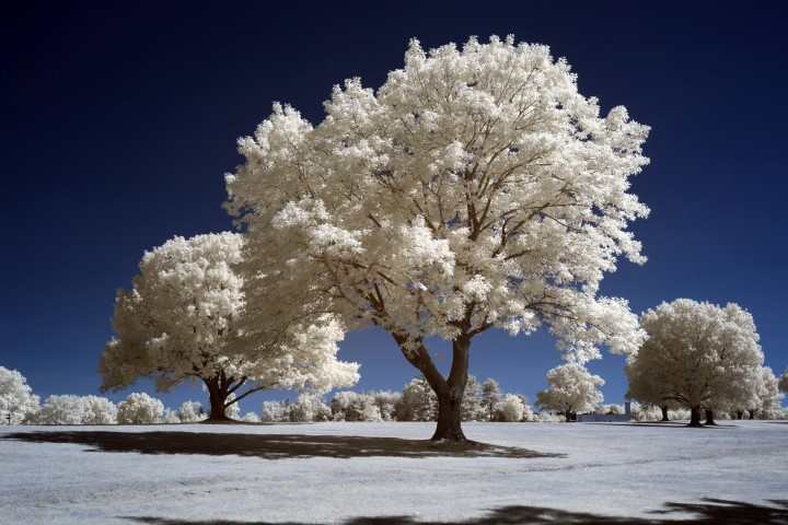 photo after infrared conversion with 665nm Infrared