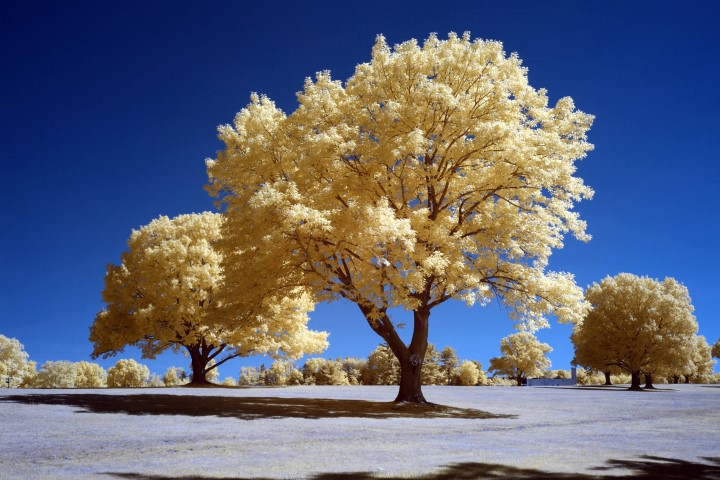 photo after infrared conversion with 590nm Infrared