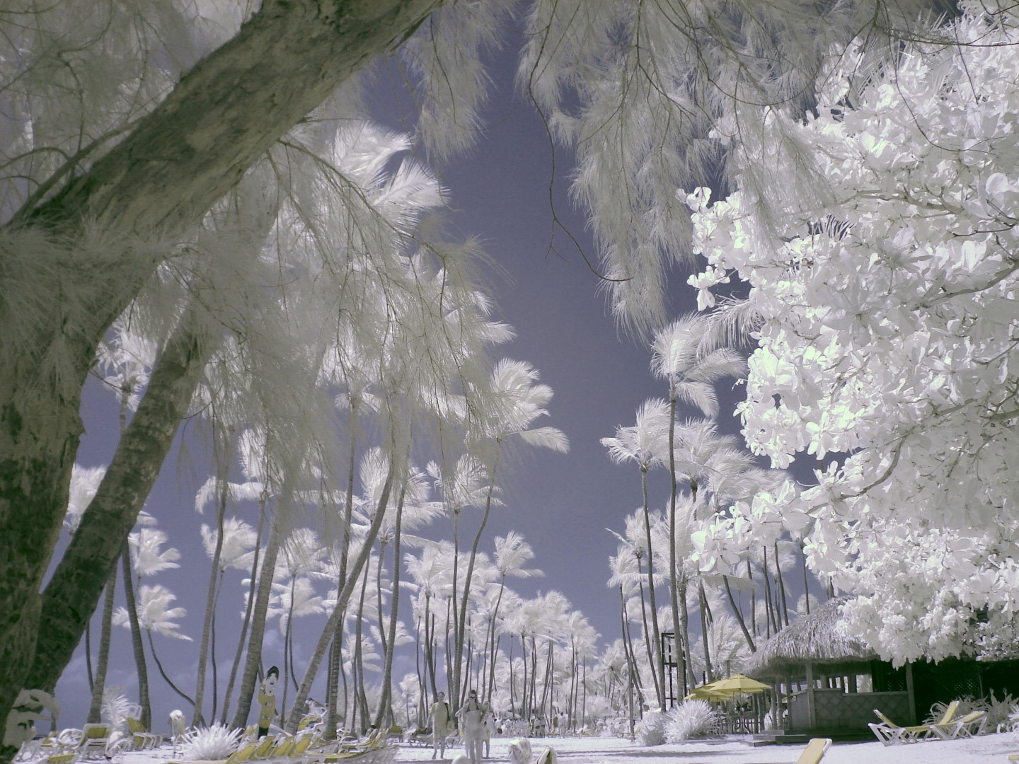 Sony infrared conversion