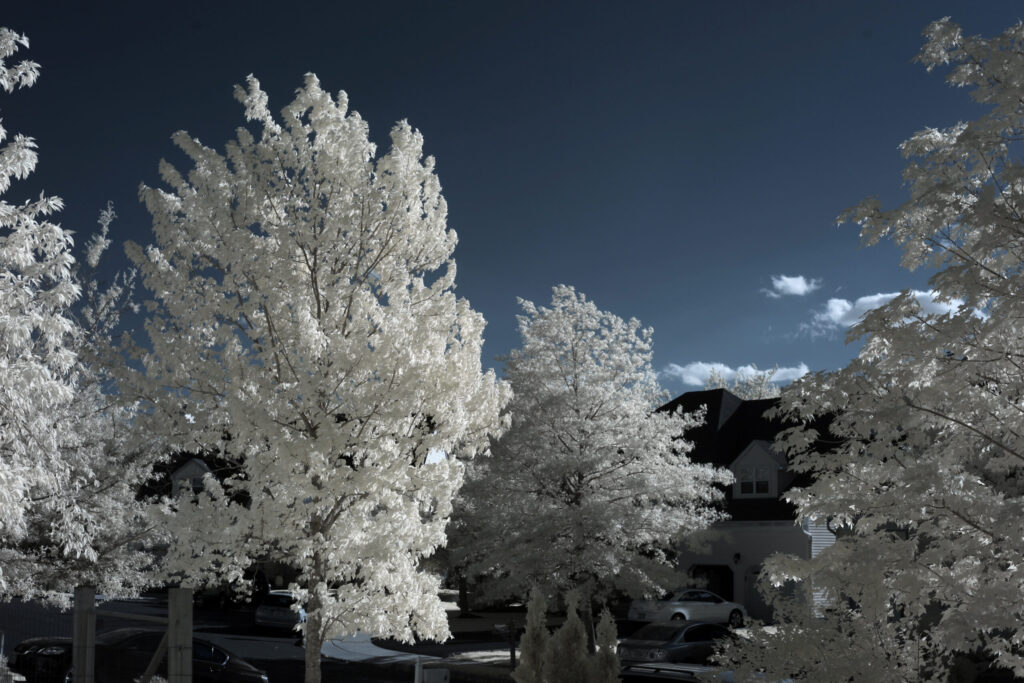 infrared conversion photo by Canon 5DII 720nm Filter