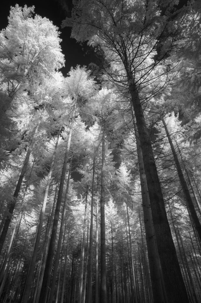 infrared conversion photo by The tops and the sky