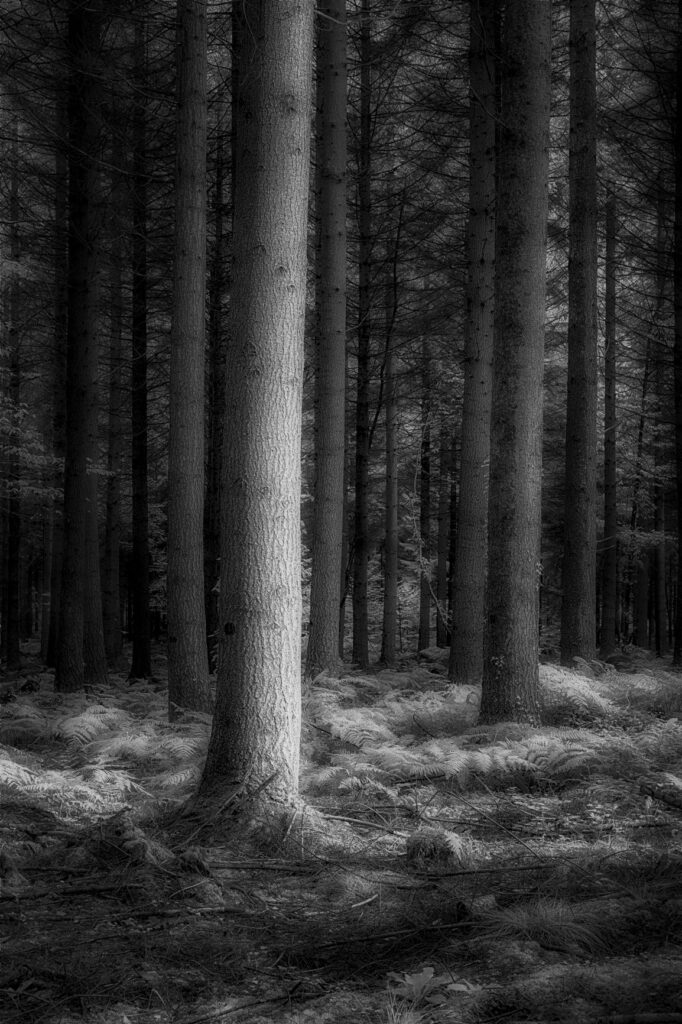 infrared conversion photo by Sill Forest