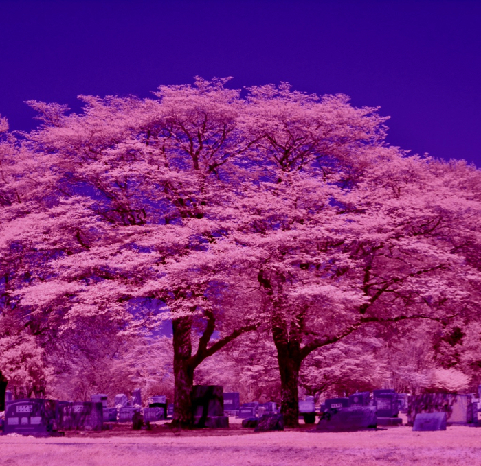 infrared conversion photo by Feed The Tree (13)